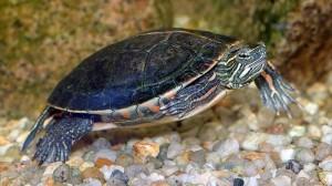 turtle-300x168.jpg