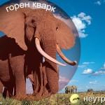 elefant-ant