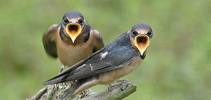 call birds