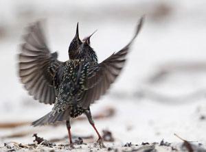birds alert