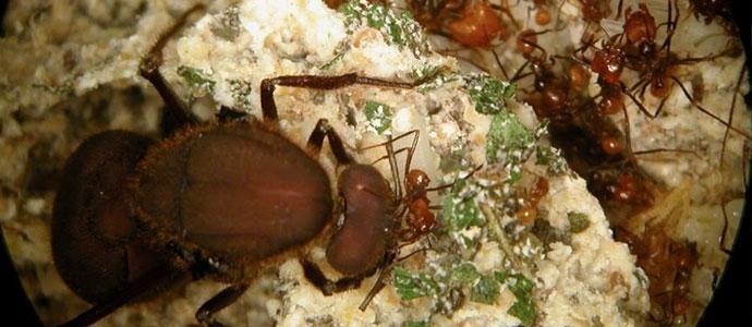 ants_cuting_leafs