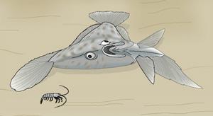 камбала (Pleuronectes platessa)